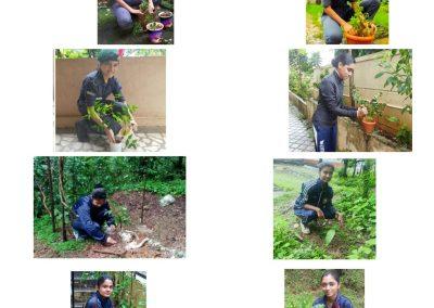 Tree Plantation Pakhwada